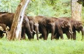 Annamalai Wildlife Sanctuary