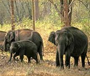 Madhumalai Wildlife Sanctuary
