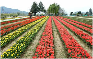 Wonderful Kashmir
