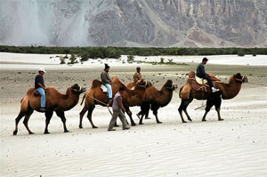 Camel Safari in Ladakh