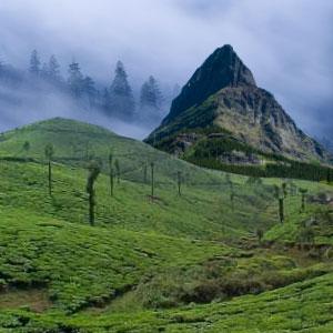Splendour Himalayas