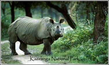 North East India With Kaziranga