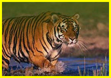 Uttarakhand WildLife Tour